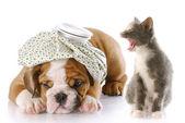Pes a kočka boj