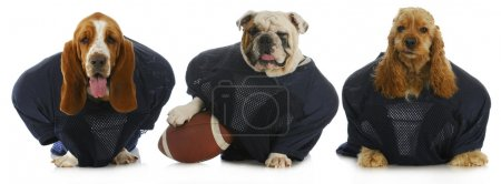 Photo for Football team - - Royalty Free Image