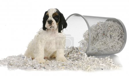 puppy sitting in recycled paper