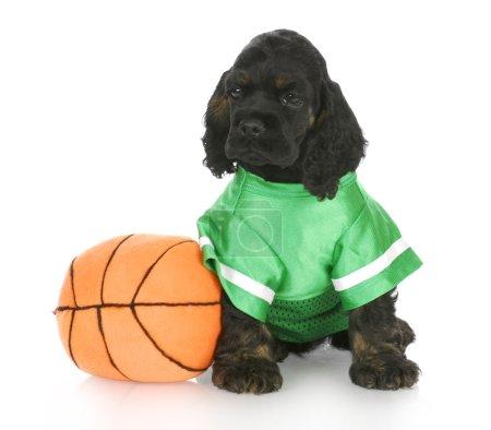 sport hound