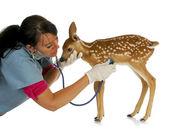 vétérinaire de la faune