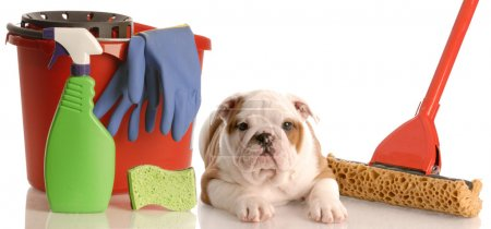 english bulldog puppy laying beside mop and bucket of cleaning supplies