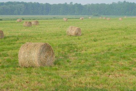 Foto de Campo de heno en ontario rural - Imagen libre de derechos