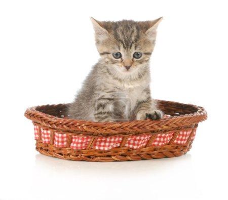 Foto de Lindo gatito sentado en una canasta aislada sobre fondo blanco - Imagen libre de derechos