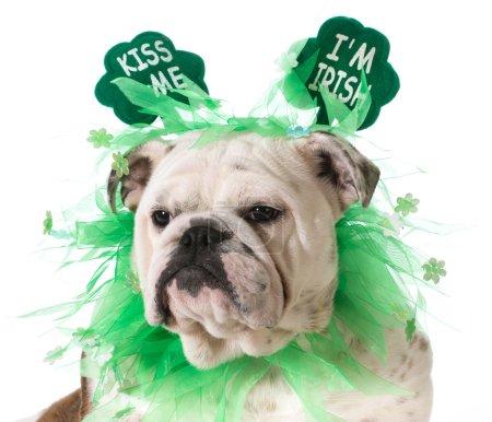 St. Patricks Day dog