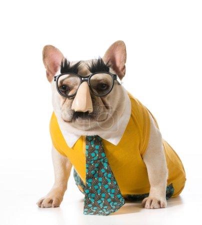 dog wearing human disguise