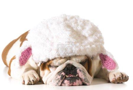 dog wearing lamb hat