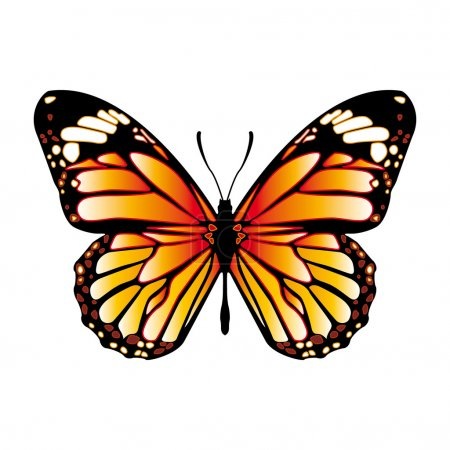 Illustration for Vector colorful monarch butterfly, - Royalty Free Image