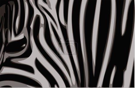 Zebra vector illustration.