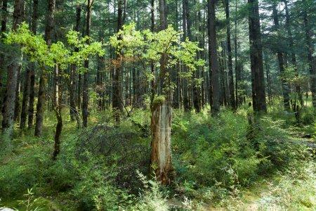 Photo pour Sichuanchina, jiuzhaigou, forêts tropicales, au point de riz sur les racines des arbres - image libre de droit