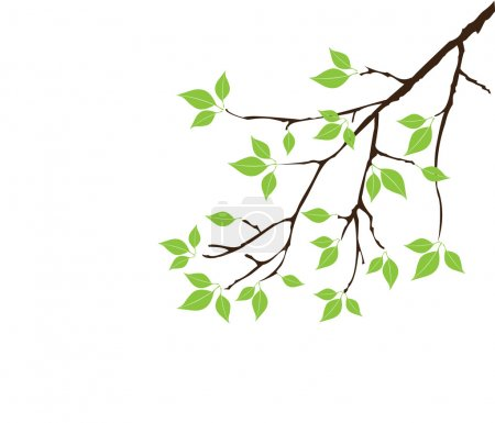 Illustration for Vector tree branch with green leaves - Royalty Free Image