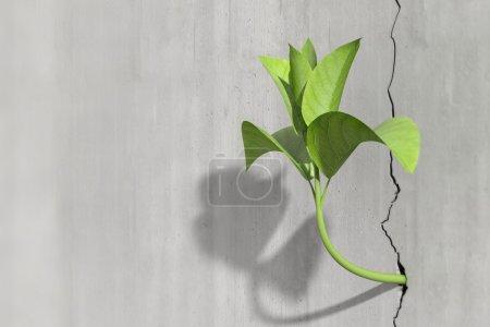 Photo pour Concept de survie et la croissance d'un peu rendu 3d d'une usine dans un mur en béton - image libre de droit