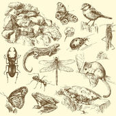 Garden animals insect