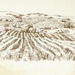 Vineyard Landscape - hand drawn illustration...