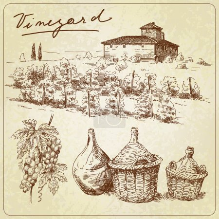 Hand drawn vineyard...