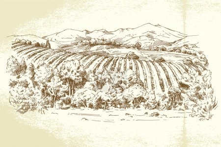 Vineyard France - hand drawn illustration...