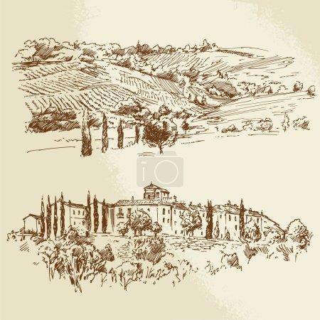 vineyard, romantic landscape