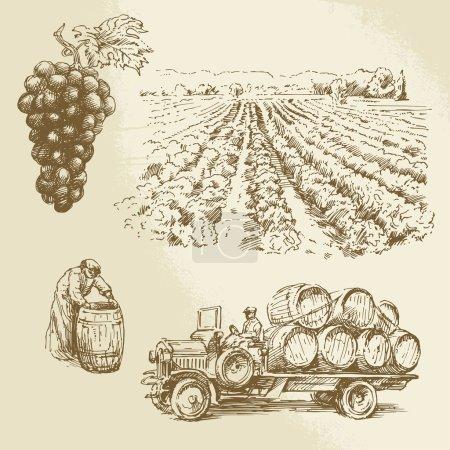 Illustration pour Vignoble, récolte, récolte à la main - image libre de droit