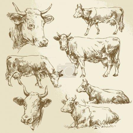 Illustration pour Vaches tirées à la main - image libre de droit