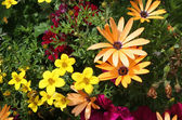 Květinový okraj
