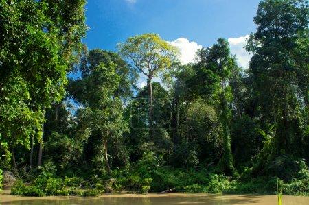 Photo pour Paysage de la forêt à Malaisie, Asie - image libre de droit