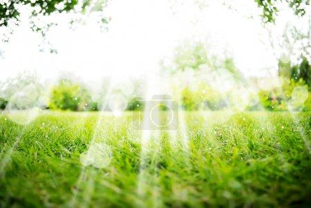 Photo pour Arrière-plan avec paysage vert d'été - image libre de droit