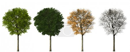 Photo for Tree - four seasons. 3D render. isolated on white background - Royalty Free Image