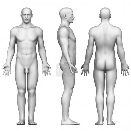 Photo for Male figure in anatomical position posterior,front, side view - Royalty Free Image
