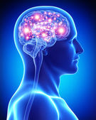 cerveau actif masculin