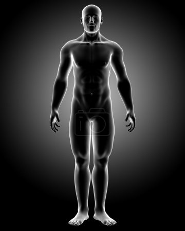 Photo pour Illustration de radiographie médicale rendu 3D du corps humain anatomie pose côté - image libre de droit