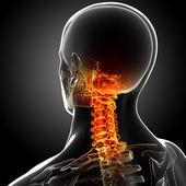 Raggi x di dolore della colonna vertebrale