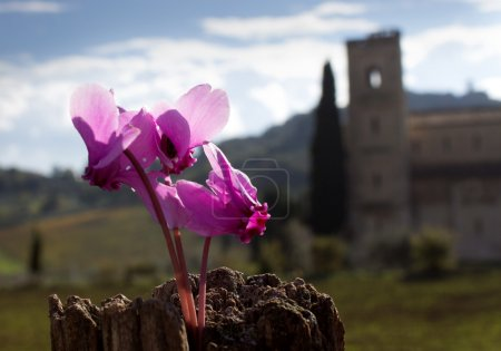 Autumn flower in Tuscany
