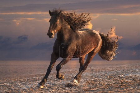 Running horse on sunset sandy beach