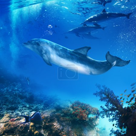 funny dolphin posing underwater