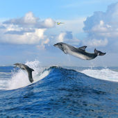 Oceanview and two dolphins leaping out from curly wave