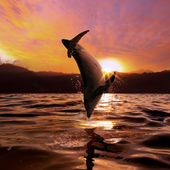 sunset at the sea and dolphin jumping from water surface