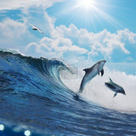 Photo pour Deux joyeux dauphins ludiques bondissant de la vague de surf de rupture de l'océan à la mousse en face du paysage marin nuageux - image libre de droit