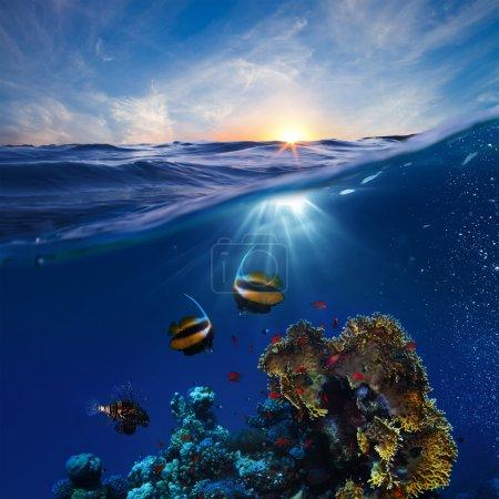 Photo pour Modèle de conception de la vie marine magnifique récif corallien avec lucarne sunset sous-marine poissons coupée en deux par la ligne de flottaison - image libre de droit