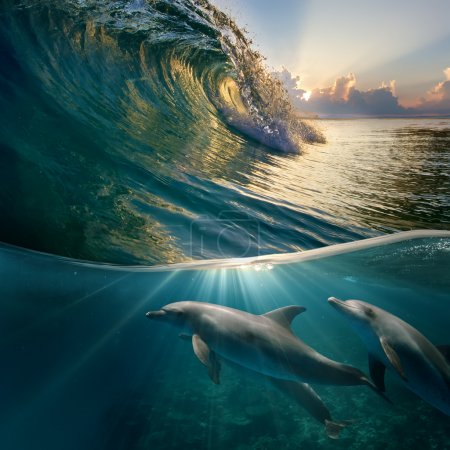 Hawaiian beautiful dolphins