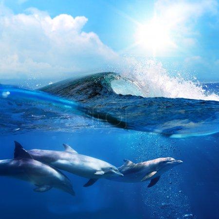 Photo pour Beaux dauphins jouant sous la vague de surf de rupture d'océan - image libre de droit