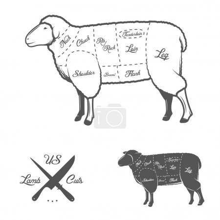 American cuts of lamb or mutton diagram