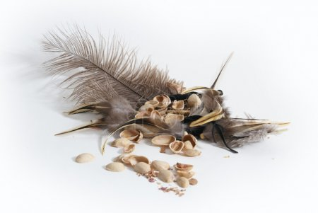 Composition of feather and nuts