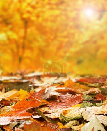 Photo for Bright autumn background made of autumn leaves and the blurred park - Royalty Free Image