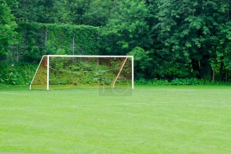 Soccer net on grass field