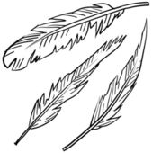Bird feathers sketch