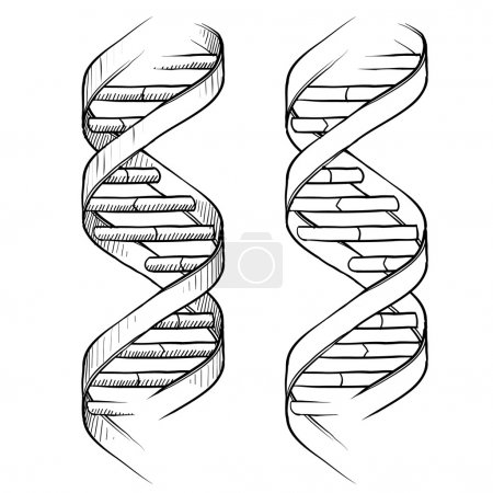 Illustration for Doodle style genetic DNA double helix illustration in vector format suitable for web, print, or advertising use. - Royalty Free Image