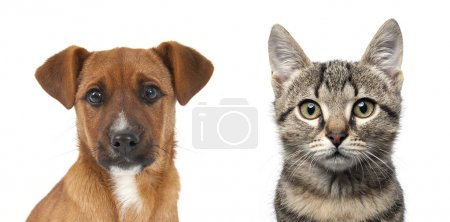 Dog and cat close up portrait over white background.