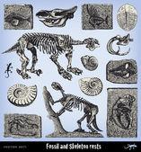 Engraving vintage fossil and skeleton set