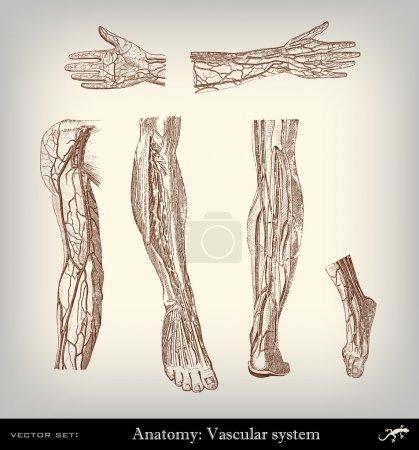 Engraving vintage vascular system