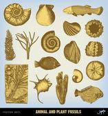 Engraving vintage Fossils set illustrations